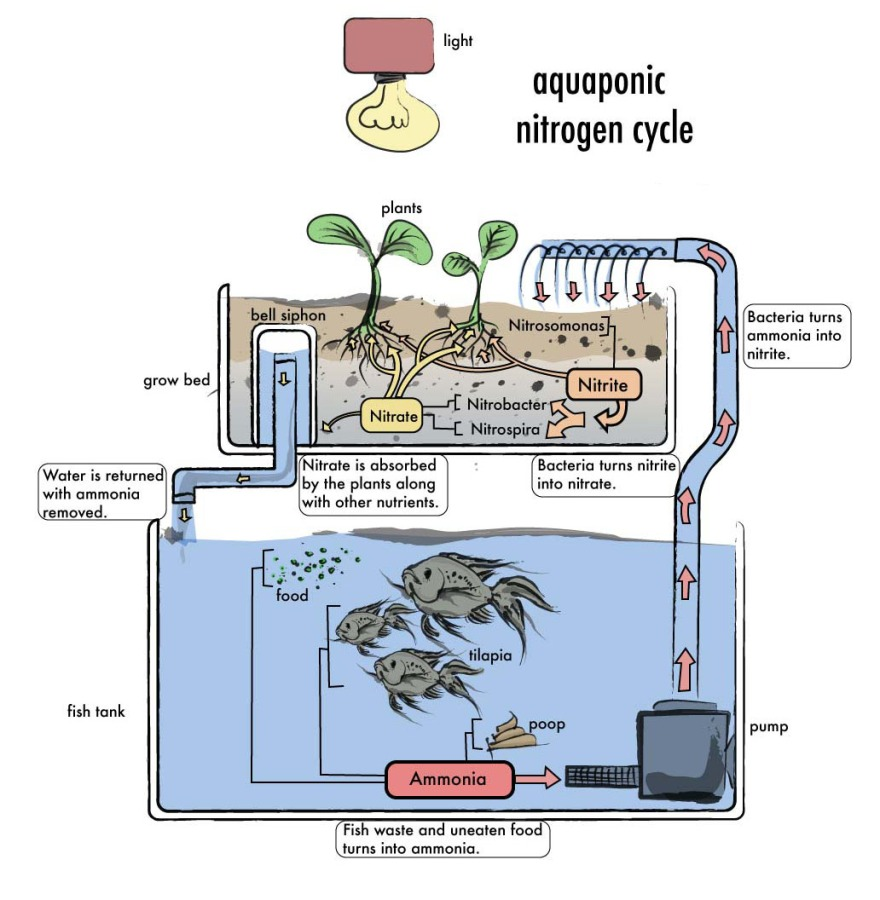 how-to-build-aquaponic-system-2
